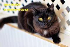 Mindi - Adopted - January 3, 2018 with Josephina