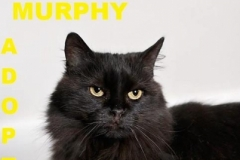 Murphy - Adopted - May 16, 2018