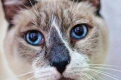 Mushie - Adopted - July 2, 2018