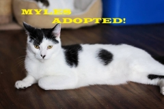 Myles - Adopted on December 15, 2018