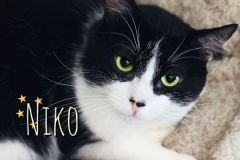 Niko-Adopted-on-August-31-2019