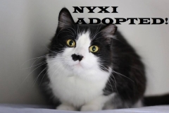 Nyxi - Adopted on December 28, 2018