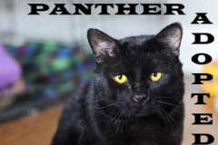 Panther - Adopted on January 24, 2019