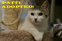 Patti - Adopted - August 26, 2018 with Missy