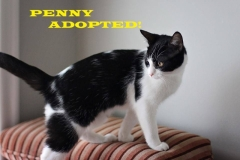 Penny - Adopted on November 3, 2018 with Mojave