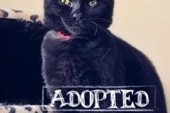 Pepper-kitten2