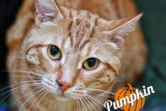 Pumpkin-Adopted-on-October-6-2019-with-Simon