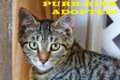 Purr-Kins - Adopted - September 23, 2018