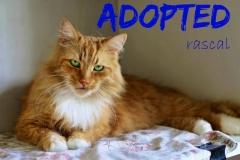 Rascal - Adopted - June 1,2017