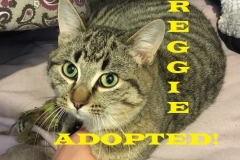 Reggie - Adopted - February 8, 2018