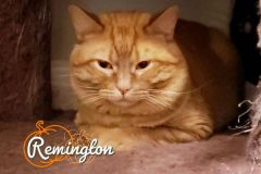 Remington-Adopted-on-October-26-2019
