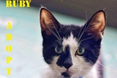 Ruby - Adopted - November 5, 2017 with Gidget