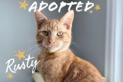 Rusty-Adopted-on-November-16-2019