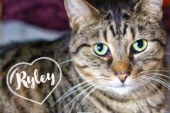 Ryley-Adopted-on-May-23-2019