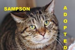 Sampson - Adopted - May 26, 2018