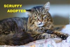 Scruffy - Adopted - July 28, 2018