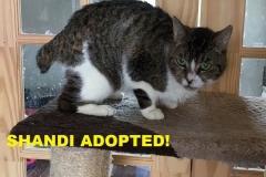 Shandi - Adopted - July 2, 2018