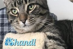 Shandi-Adopted-with-December-21-2019-with-Zippety