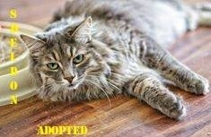 Sheldon - Adopted - Nov 9, 2017