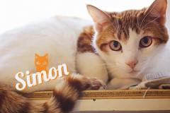 Simon-Adopted-on-October-6-2019-with-Pumpkin
