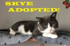 Skye - Adopted on November 4, 2018