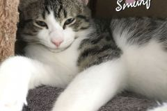 Smurf-Adopted-on-April-11-2020