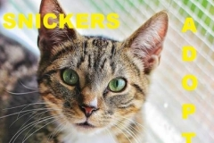 Snickers - Adopted - May 28, 2018 with Heidi