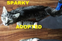 Sparky - Adopted - July 16 2018