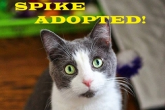 Spike - Adopted on December 16, 2018