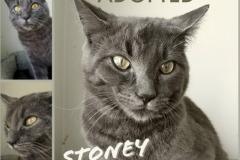 Stoney-Adopted-on-June-22-2019