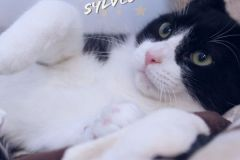 Sylvester-Adopted-in-2020-with-Buttercup