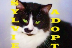 Sylvie - Adopted - January 20, 2018 with Martie