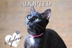 Sylvie-Adopted-on-November-5-2019