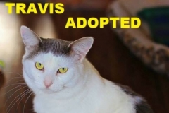 Travis - Adopted - May 18, 2018 with Flanders
