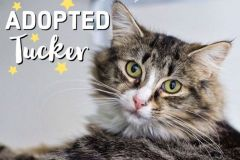 Tucker-Adopted-on-January-25-2020-with-Brooke