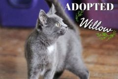 Willow-Adopted-on-March-21-2020