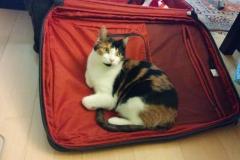 Angel-on-suitcase